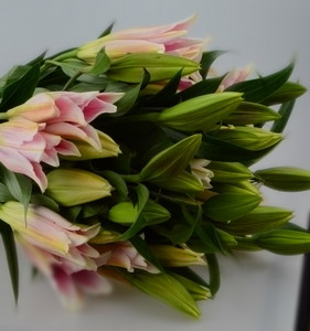 Fresh Cut flowers Lily-Sorbonne
