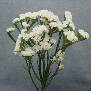 Fresh Cut Flowers -Statice-03