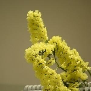 Fresh Cut Flowers -Statice-06