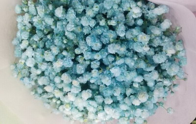 Baby's Breath Flower(Gypsophila)-06