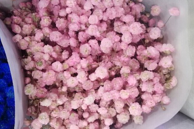 Baby's Breath Flower(Gypsophila)-05