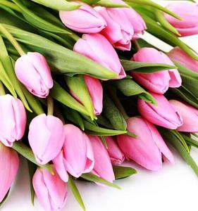 Fresh Cut Flower-Tulip-09