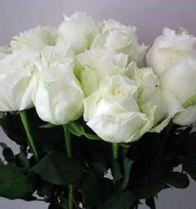 Fresh Cut Flower Rose -Tineke