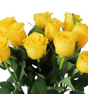 Fresh Cut Flower Rose -Grigio Rasso