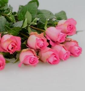 Fresh Cut Flower Rose -Wake UP Rose