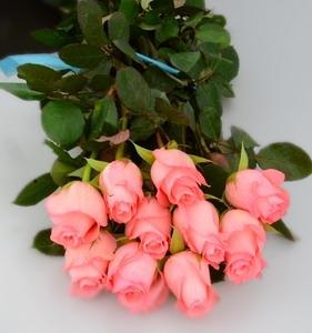 Fresh Cut Flower Rose -Diana