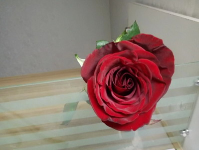 Fresh Cut Flower Rose -Black Magic