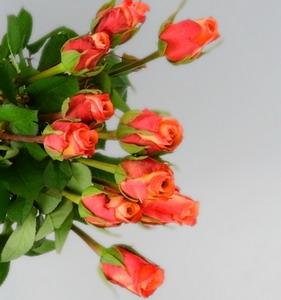 Fresh Cut Flower Rose -Golden Rose