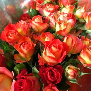 Fresh Cut Flowers-Spray Roses-05