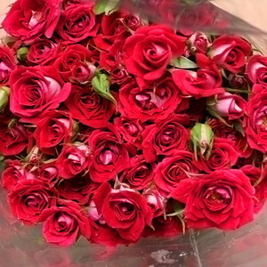 Fresh Cut Flowers-Spray Roses-01