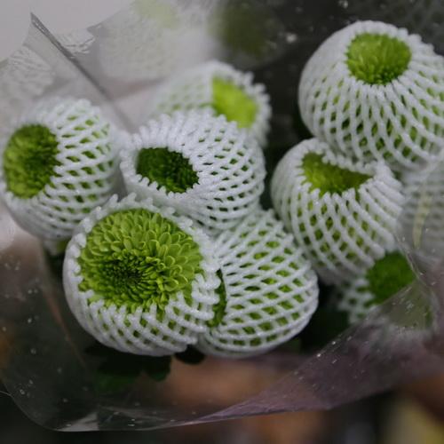 PingPong Chrysanthemum-03