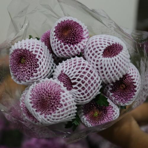 PingPong Chrysanthemum-01