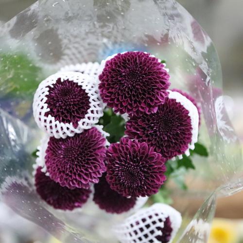 PingPong Chrysanthemum-04