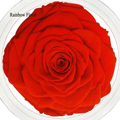 9-10CM Big Size preserved Rose head(1pcs-box)-15