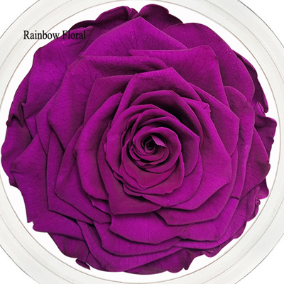 9-10CM Big Size preserved Rose head(1pcs-box)-12
