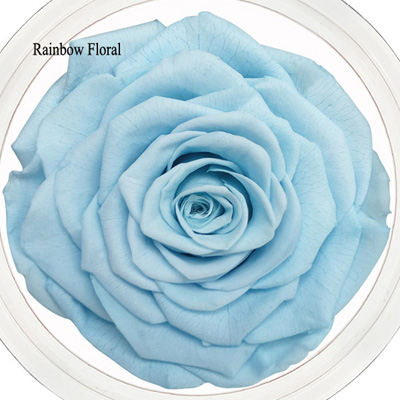 9-10CM Big Size preserved Rose head(1pcs-box)-10