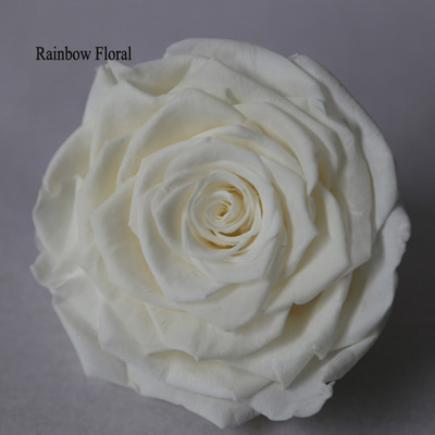9-10CM Big Size preserved Rose head(1pcs-box)-16