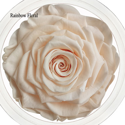 9-10CM Big Size preserved Rose head(1pcs-box)-13