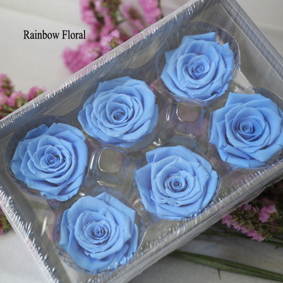 5-6CM (6pcs-box) Solid color preserved rose head-13