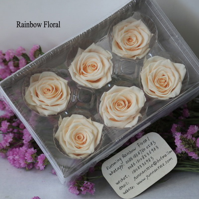 5-6CM (6pcs-box) Solid color preserved rose head-11