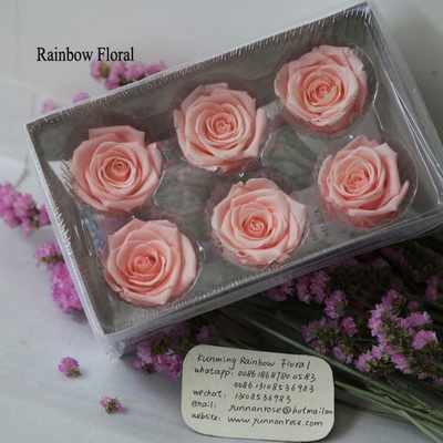5-6CM (6pcs-box) Solid color preserved rose head-16