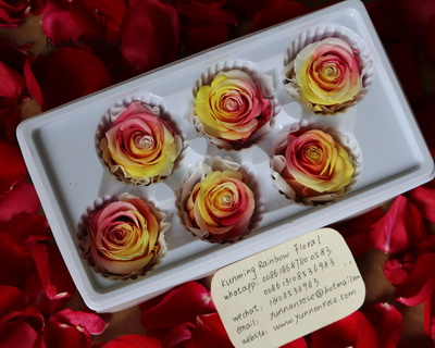 5-6CM(6pcs-box) Bi-color preserved rose head-12
