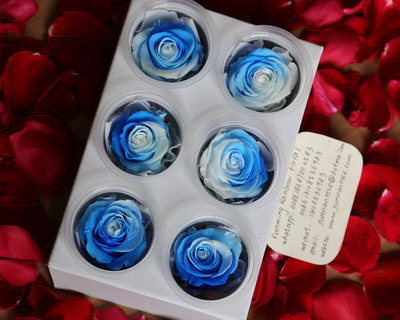 5-6CM(6pcs-box) Bi-color preserved rose head-11