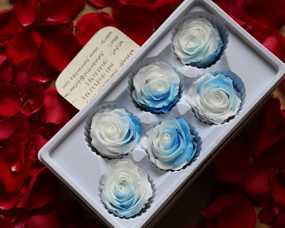 5-6CM(6pcs-box) Bi-color preserved rose head-10