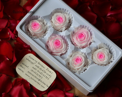5-6CM(6pcs-box) Bi-color preserved rose head-05