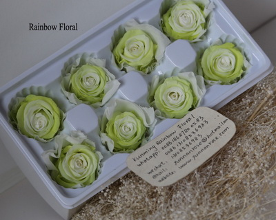 4-5CM (8pcs-box) Bi-color preserved rose head-07
