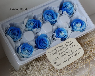 4-5CM (8pcs-box) Bi-color preserved rose head-10